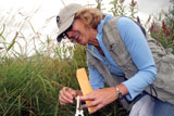 Marsha Holt-Kingsley collects rare penstemon