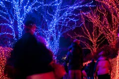 ZooLights, a winter wonderland of nearly 1.5 million brilliant colored lights, runs now through Jan. 5 at the zoo.