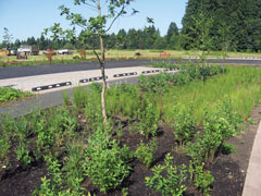 Graham Oaks stormwater swales