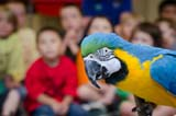 Oregon Zoo campers get to meet a blue and gold macaw.