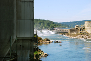 Willamette Falls and Blue Heron