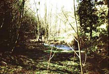 photo of Tryon Creek Linkages target area