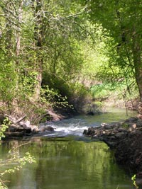 photo of Lower Tualatin Headwaters target area