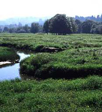 photo of Willamette River Greenway target area