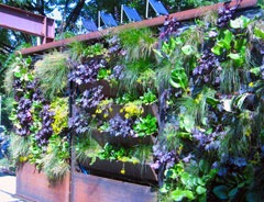 Three living wall systems
