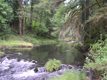 The Rock Creek Headwaters, part of the Tualatin River Watershed. (Metro)